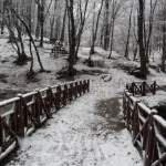 Belgrade Forest under snow, January 2012 (thumbnail)